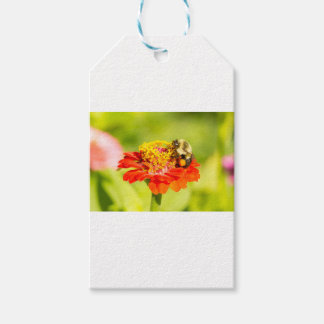 bee on red flower with pollen sacs gift tags