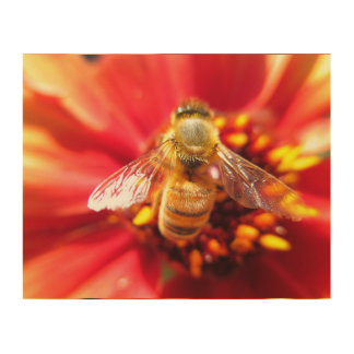 Bee on Red Flower Wood Wall Decor