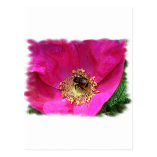 Bee on Rose Postcard