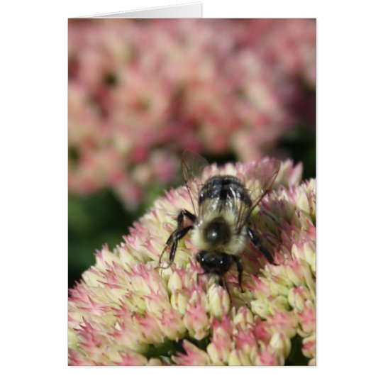 bee on sedum card