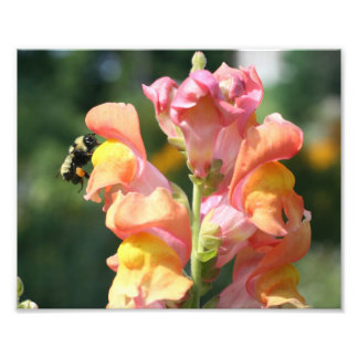 Bee On Snapdragon Flower 10x8 Nature Print Photo Print