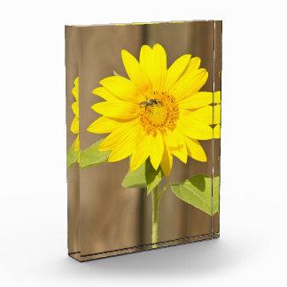 Bee on Sunflower Acrylic Award