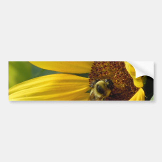 Bee on Sunflower Bumper Stickers