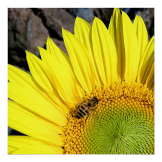 Bee On Sunflower Close Up Photograph Poster