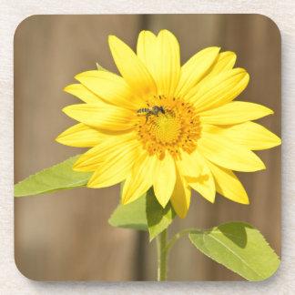 Bee on Sunflower Coasters