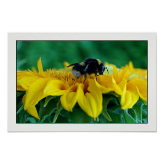 Bee on sunflower IV Poster