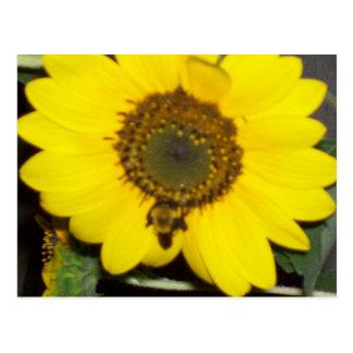 Bee on Sunflower Postcard