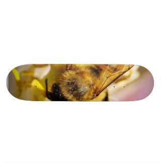 Bee On The Meyer Lemon Tree In My Balcony Skate Board