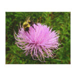 Bee on Thistle Flower Canvas Print