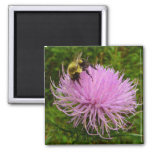 Bee on Thistle Flower Magnet