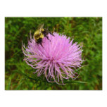 Bee on Thistle Flower Photo Print