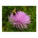 Bee on Thistle Flower Postcard