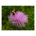 Bee on Thistle Flower Poster