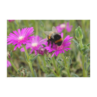 Bee On Trailing Iceplant Canvas Print
