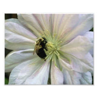Bee On White Clematis Flower 10x8 Nature Print Photographic Print