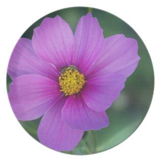 Bee on Wildflower Plates