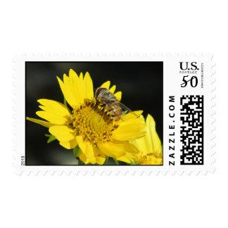 Bee on Yellow Flower Postage