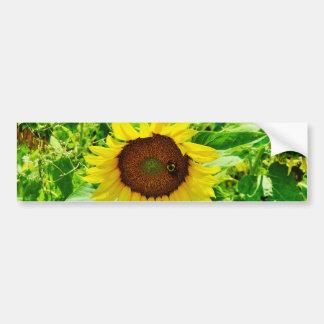 Bee on yellow Sunflower Bumper Sticker