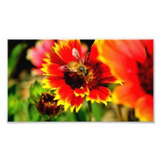 Bee Art Photo