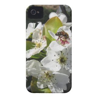 Bee pollinates a pear blossom in spring Case-Mate iPhone 4 case