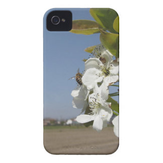 Bee pollinates a pear blossom in spring iPhone 4 case