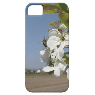 Bee pollinates a pear blossom in spring iPhone SE/5/5s case