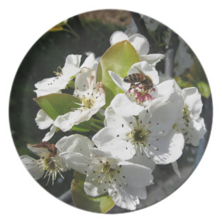Bee pollinates a pear blossom in spring melamine plate