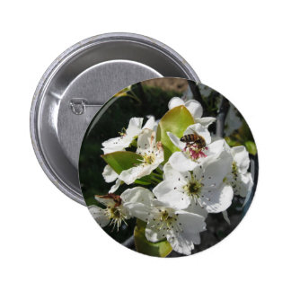 Bee pollinates a pear blossom in spring pinback button