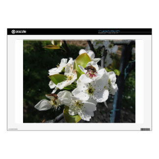 Bee pollinates a pear blossom in spring skins for laptops