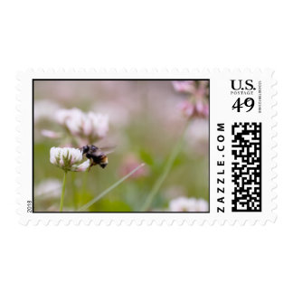 Bee Pollinating Clover Postage