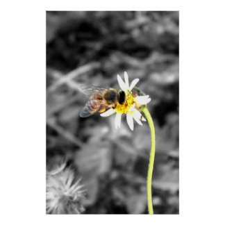 Bee Pollinating Poster