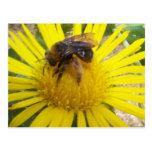 bee post card