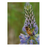 Bee Post Cards