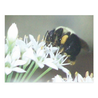 Bee Postcards