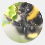 Bee Round Sticker