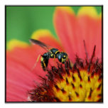 Bee Spot Print