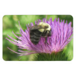 Bee & Thistle Magnet