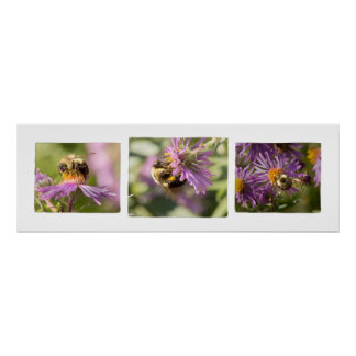 Bee-u-tiful Storyboard Bee and Flower Photography Poster