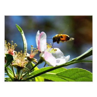 Bee & White Flower Photography Photo