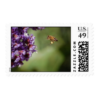 Bee with Pollen Postage