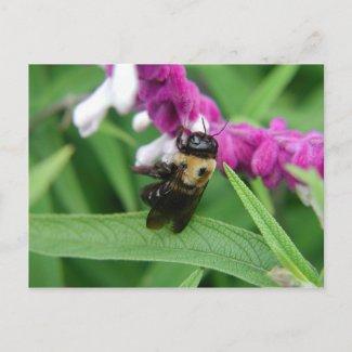 Bee with Velvet Flowers postcard