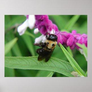 Bee with Velvet Flowers print