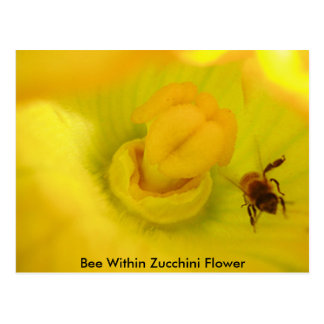 Bee Within Zucchini Flower Postcard