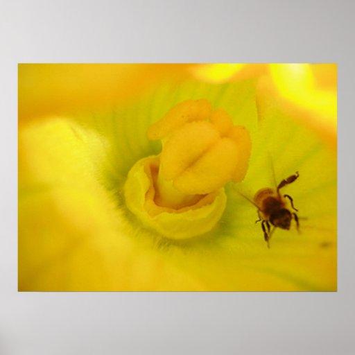 Bee Within Zucchini Flower Print