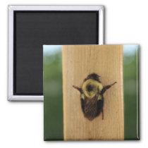 Bee-zilla Magnet