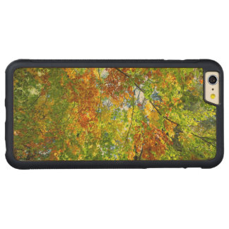 Beech Autumn Leaves Carved Maple iPhone 6 Plus Bumper Case