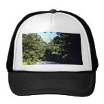 Beech Forest And River, Mount Aspiring National Pa Mesh Hats