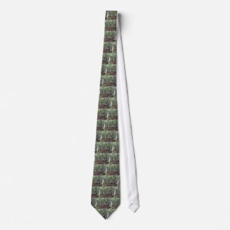 Beech forest landscape in summer . Tuscany, Italy Tie
