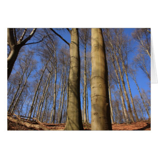 beech grove stationery note card