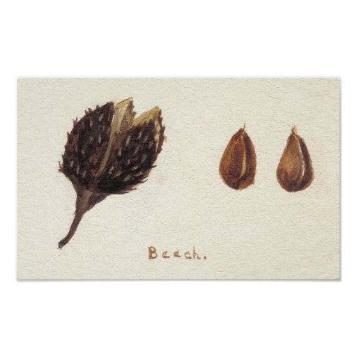Beech Nut Posters